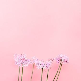 Mazzo di fiori bella davanti alla parete rosa
