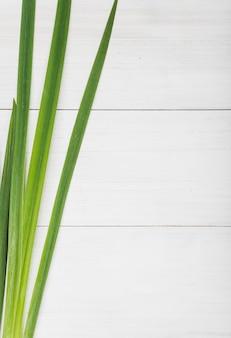 Mazzo di foglie lunghe piante