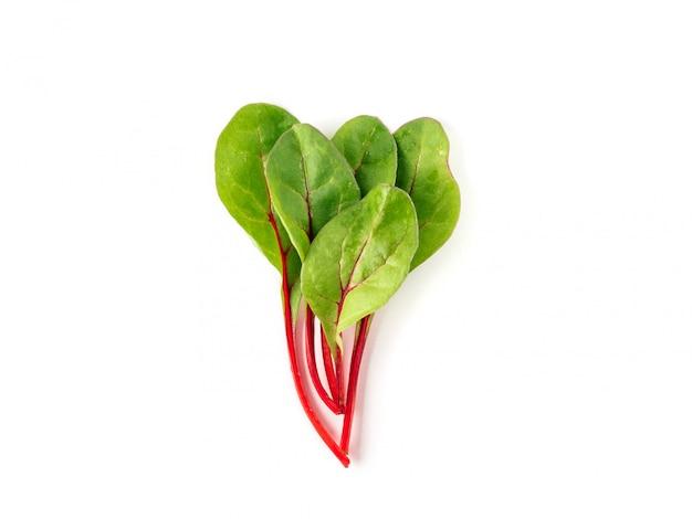 Mazzo di foglie verdi fresche della bietola o di foglie dell'insalata della barbabietola su fondo bianco.