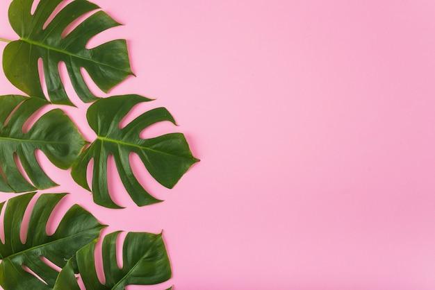 Mazzo di foglie verdi sul rosa