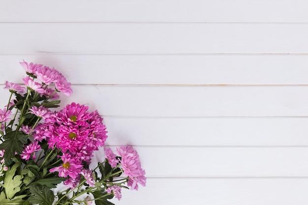 Mazzo di margherite rosa brillante su bianco
