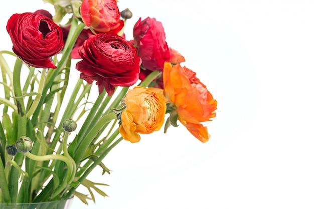 Mazzo di ranunkulyus di fiori rossi su bianco