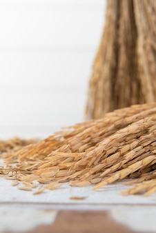 Mazzo di spighe di riso