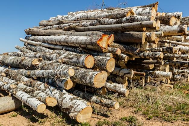 Mazzo di tronchi accatastati.