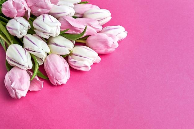 Mazzo di tulipani rosa e bianchi su sfondo rosa brillante.