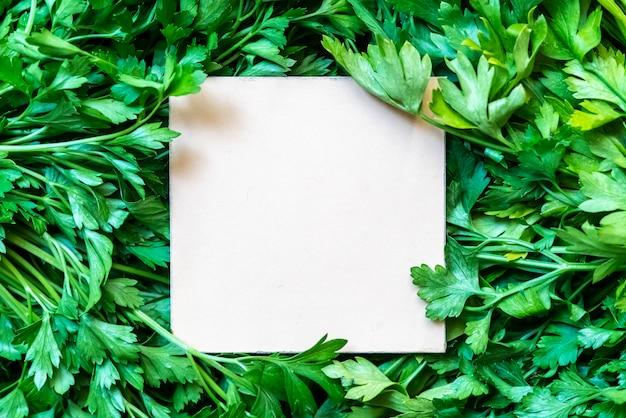 Mazzo verde crudo fresco dell'erba del prezzemolo con la struttura del quadrato bianco sullo spazio creativo f della copia superiore