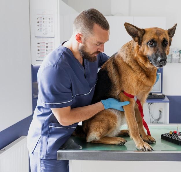 Medico attento del colpo medio che aiuta grande cane