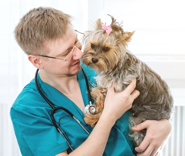 Medico veterinario che tiene il cane dell'yorkshire terrier sulle mani alla clinica del veterinario. concetto di cura degli animali domestici