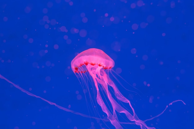 Meduse nel mare