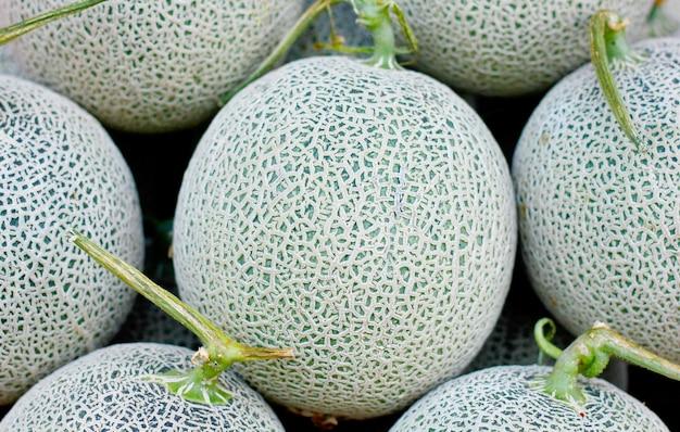 Melone cantalupo close up