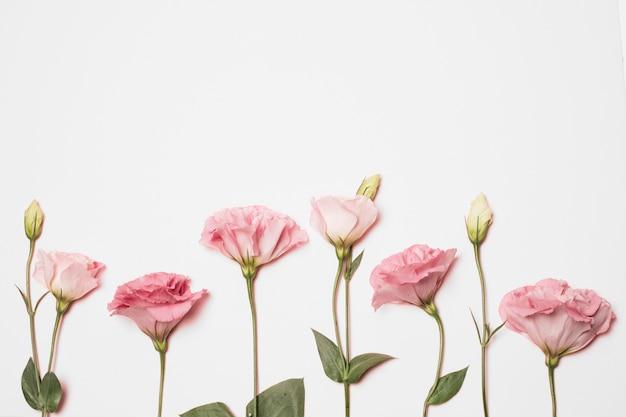 Meravigliosi fiori freschi di rosa