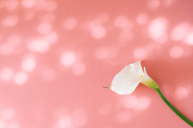 Meraviglioso fiore bianco fresco