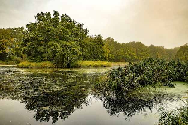 Meraviglioso lago calmo circondato da alberi e piante