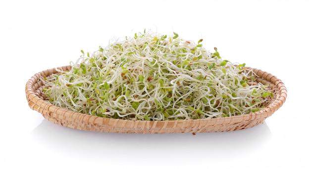Merce nel carrello del germoglio di erba medica su spazio bianco