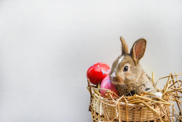 Merce nel carrello di seduta del coniglio delle uova di pasqua e del coniglietto di pasqua
