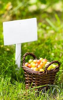 Merce nel carrello ed insegna dell'uva spina su erba