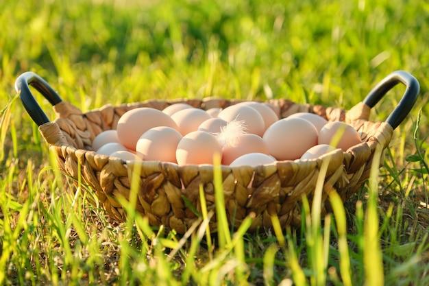 Merce nel carrello fresca delle uova del pollo dell'azienda agricola sull'erba in natura, alimento naturale sano