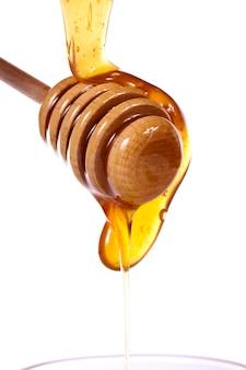 Merlo acquaiolo del miele
