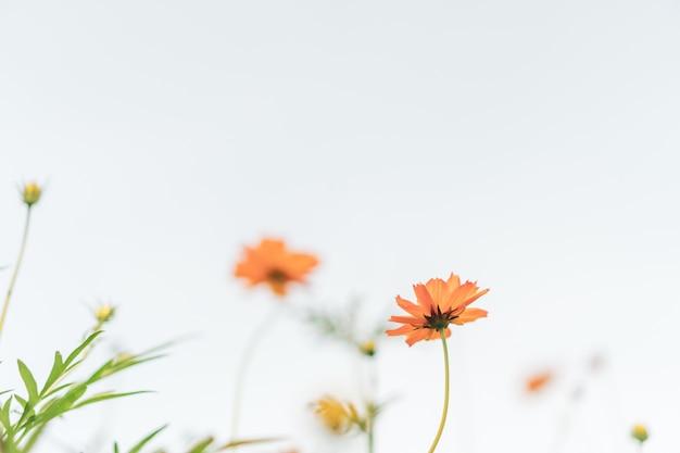 Messa a fuoco selettiva di bellissimi fiori colorati