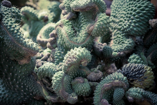 Messa a fuoco selettiva di cactus e succulente verde close up
