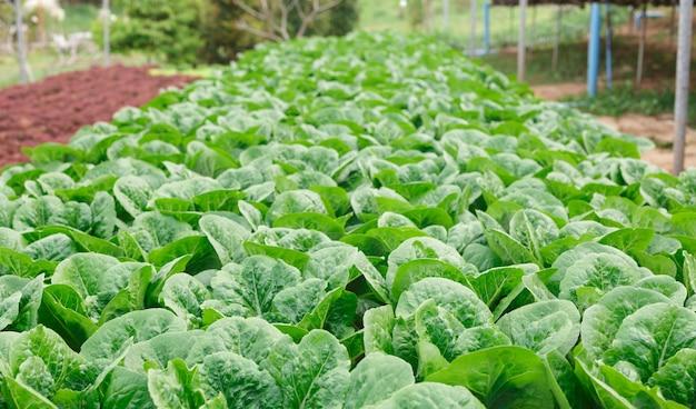 Metodo di coltura idroponica delle piante in crescita