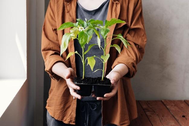 Mezzo colpo persona in possesso di un vassoio di semina