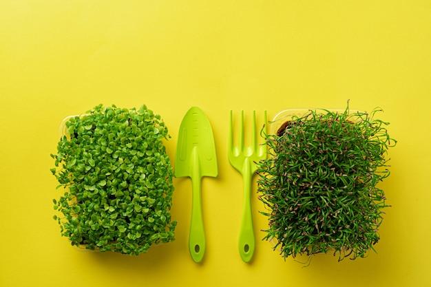 Micro germogli crescenti verdi su fondo giallo, vista superiore