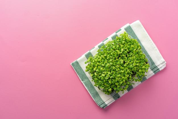 Micro germogli crescenti verdi su fondo rosa, vista superiore