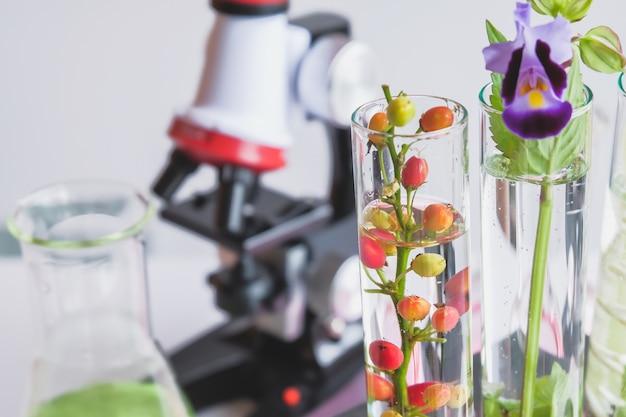 Microscopio e piccola pianta in provetta, concetto di biotecnologia del laboratorio.
