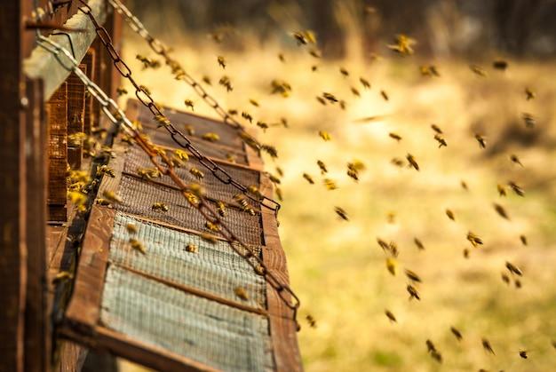 Miele e api in favo utile delizioso dessert