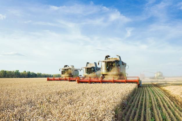 Mietitrebbiatrice raccolta grano dorato maturo sul campo