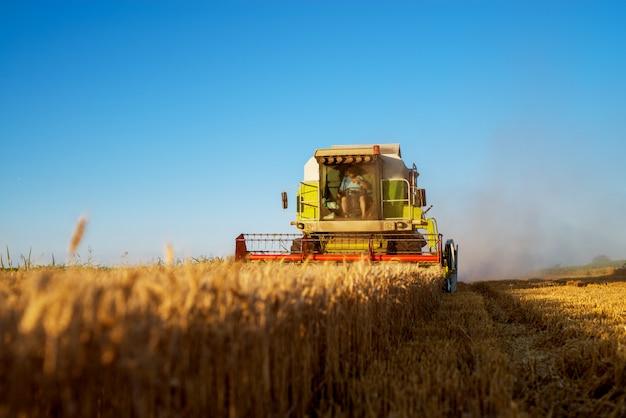 Mietitrice che funziona al campo nella mattina soleggiata. concetto di agricoltura.