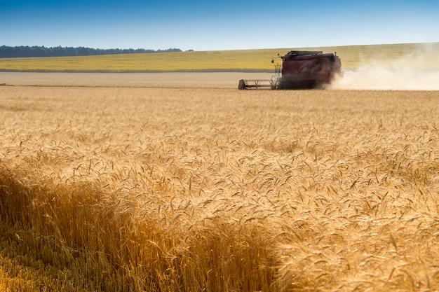 Mietitrice nel campo di grano, colture rosse del campo di mietitrebbiatura