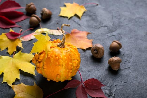 Mini zucca e foglie colorate di autunno sulla superficie di calcestruzzo scura.
