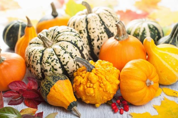Mini zucche decorative per halloween
