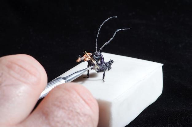 Miniatura di bug che suona il violino