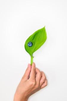 Mirtilli eco. mirtilli ecologici naturali. copia spazio per il testo. cibo salutare