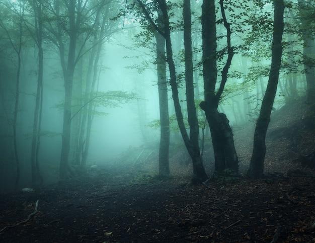 Misteriosa vecchia foresta scura nella nebbia