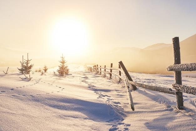Misterioso paesaggio invernale maestose montagne in inverno. albero innevato inverno magico. biglietto d'auguri fotografico. dei carpazi. ucraina