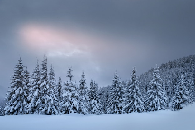 Misterioso paesaggio invernale, maestose montagne innevate. biglietto d'auguri fotografico. ucraina dei carpazi europa