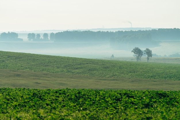 Misty campo arato in primavera.