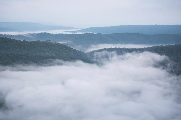 Misty mountain forest landscape nella nebbia mattutina