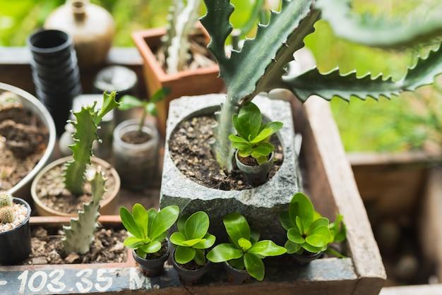 Mix cactus e scculent sulla tabella woof