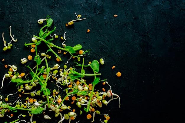 Mix di lenticchie germogliate, fagioli, fagiolo verde, piselli, ravanelli, lino, girasole sul muro nero. dieta vegana e crudista.