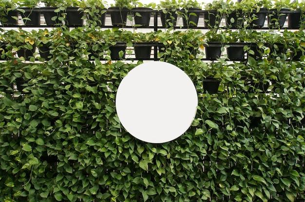 Mock up bianco vuoto del cartello sullo spazio della parete degli alberi per il testo. montage di visualizzazione del prodotto