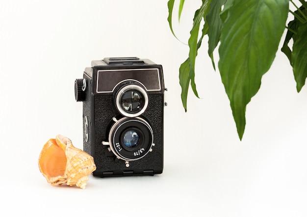 Mock up muro bianco, vecchia macchina fotografica, pianta e conchiglia.