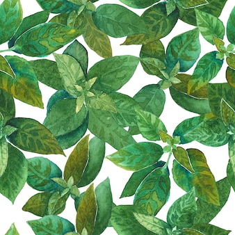 Modello a base di erbe verde senza cuciture disegnato a mano dell'acquerello.