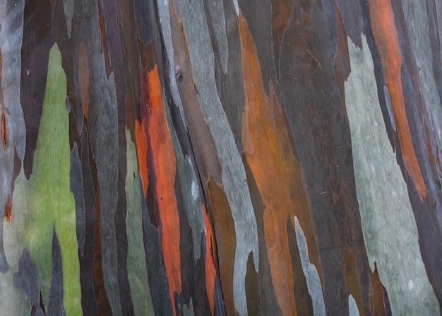 Modello colorato sulla corteccia dell'albero tropicale