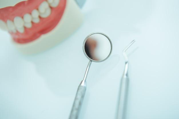 Modello dei denti della mascella