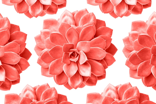 Modello della pianta succulenta nel colore di corallo vivente isolato su bianco
